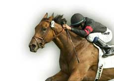 Жокей язди кон